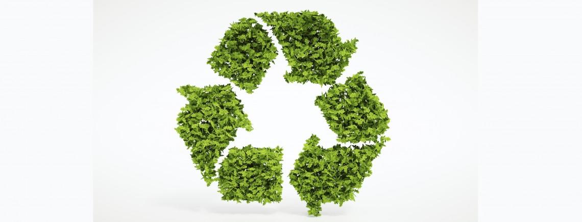 Sustainability App_1140